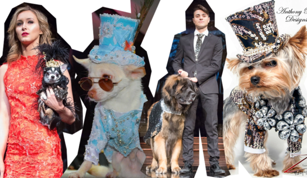 Canine fashion show, FashionHumber,collection, College, woof woof, puppies, Pet fashions, dog fashion, pet lovers